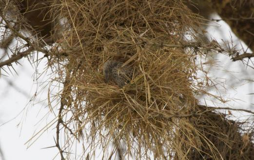 explaining  birds   building blocks  nests yale school  engineering applied science