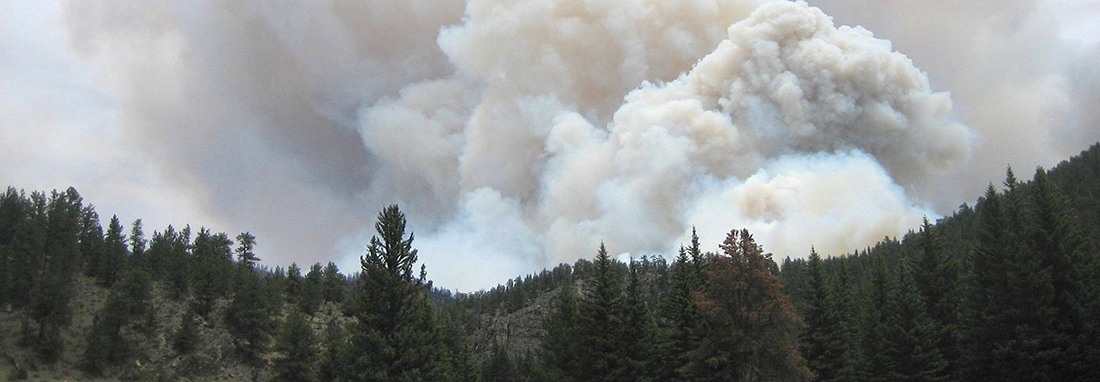image of a forest fire